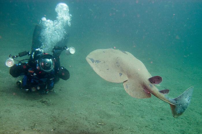 Large fish in sea water