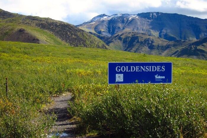 Goldensides