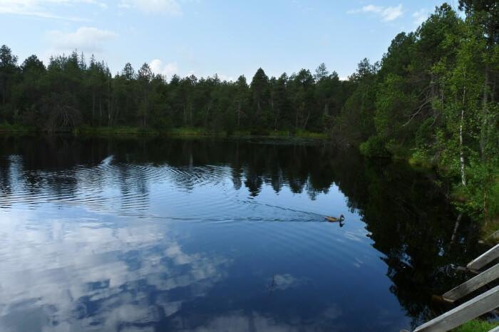 Great-Moss-Lake