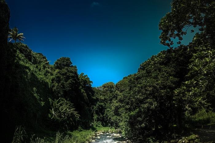 Landscape Tree Beautiful River Mauritius Sky