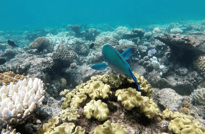 Under sea water view