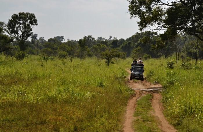 Jeep Safari View