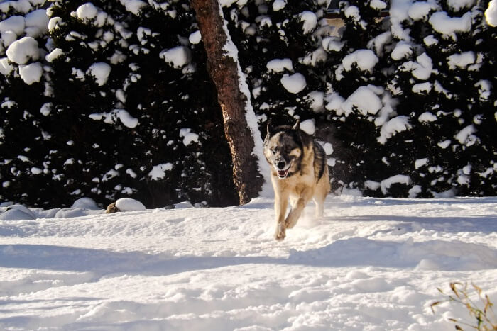 Make new furry friends at the Arctic Circle Husky Park
