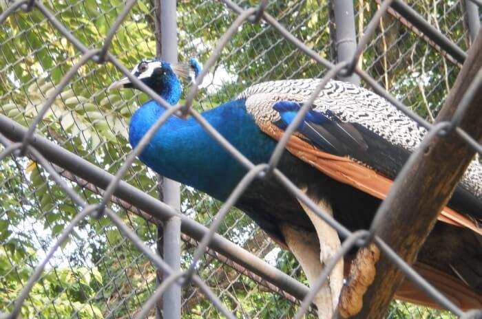 Malabon-Zoo