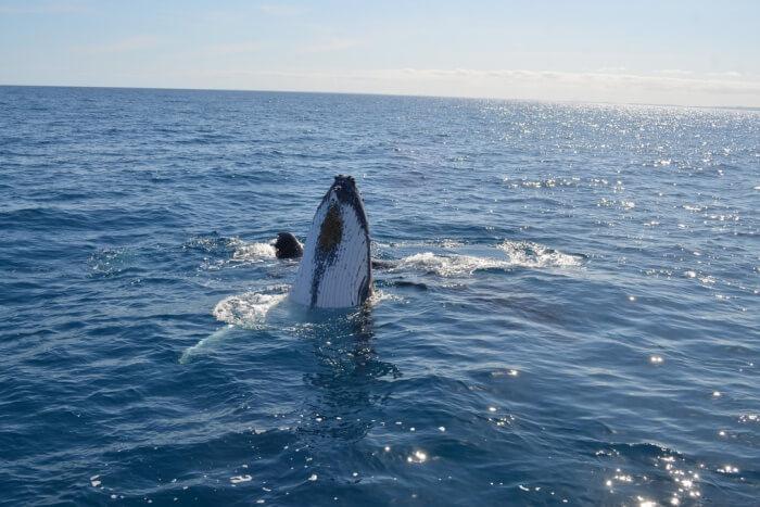 Marine Mammal Eco Safari