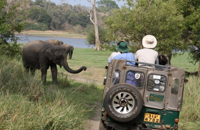 Elephant in National Park