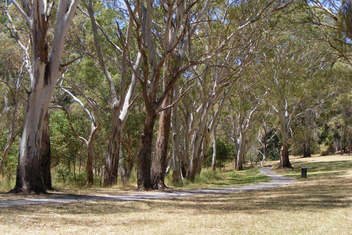 Morialta Conservation Park