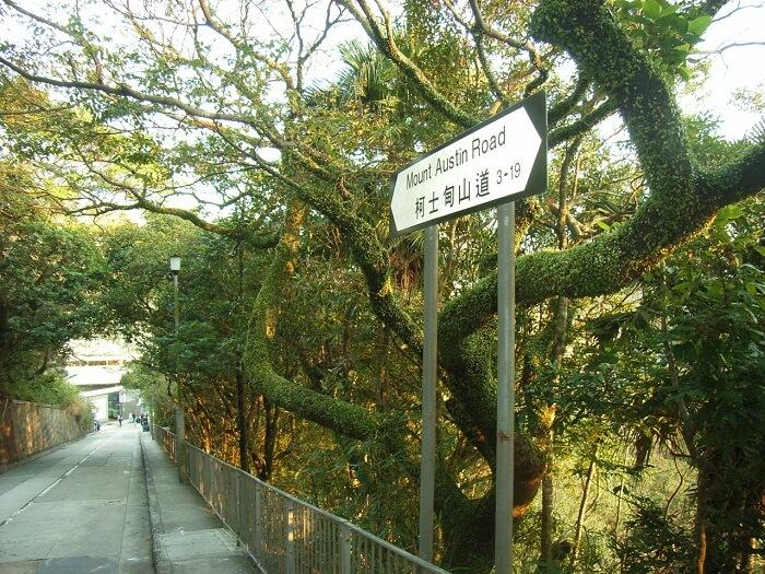 road to mount austin