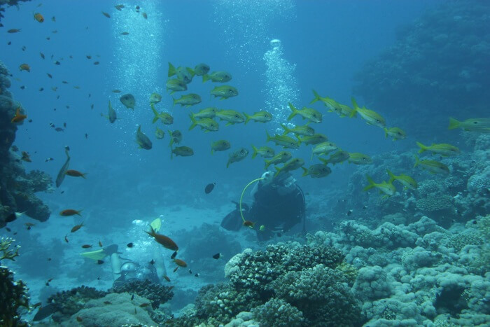 Small fish under sea water