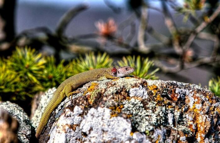 Colourful lizard view