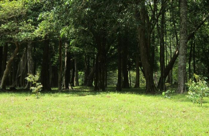 Long trees