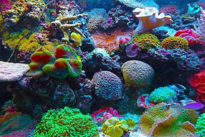 Coral Reef Salt Water
