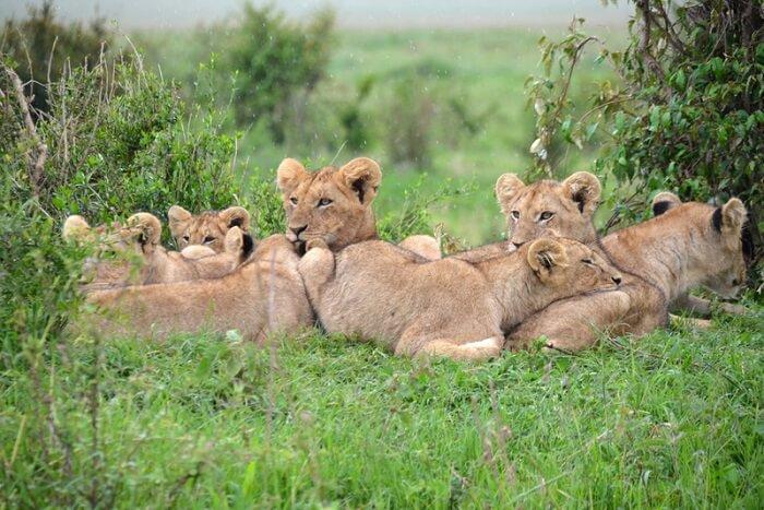 Safari In New Jersey cover