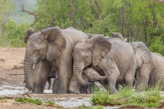 Safari at the Hluhluwe & Imfolozi National Park