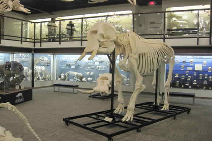 Skeleton of Dynasore