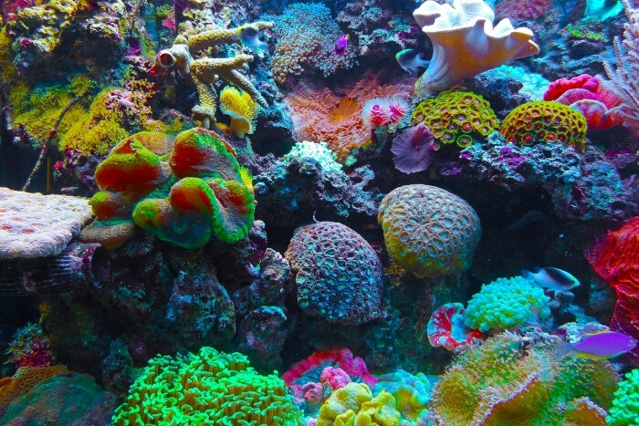 Snorkel and admire the coral reefs