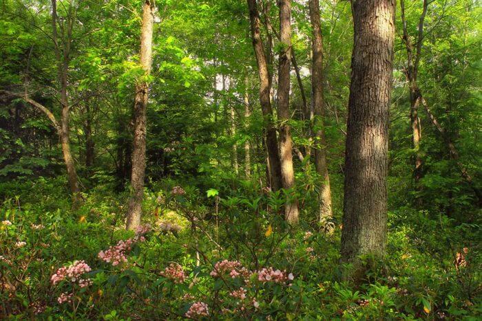 Vibrant Flower Forest