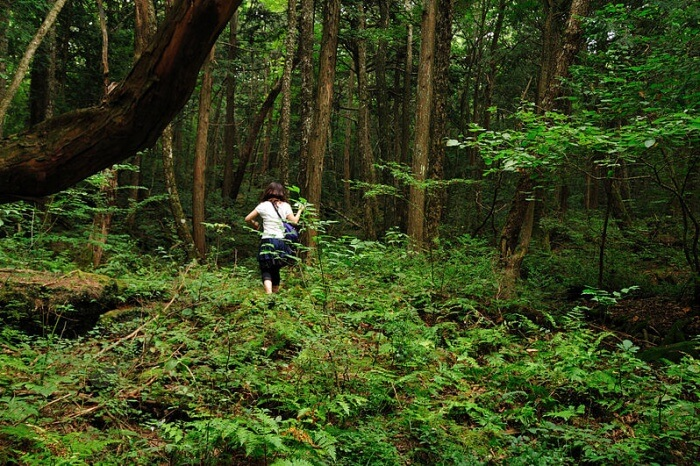 The suicide forest of Aokigahara
