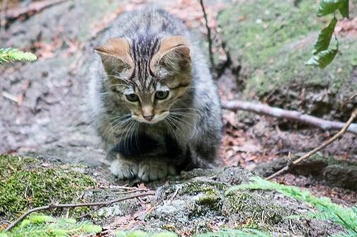 Tier-Freigelände im Nationalparkzentrum Lusen