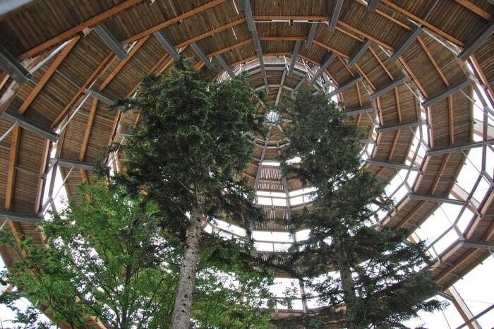 Treetop Treetop Path Tree Bavarian Forest