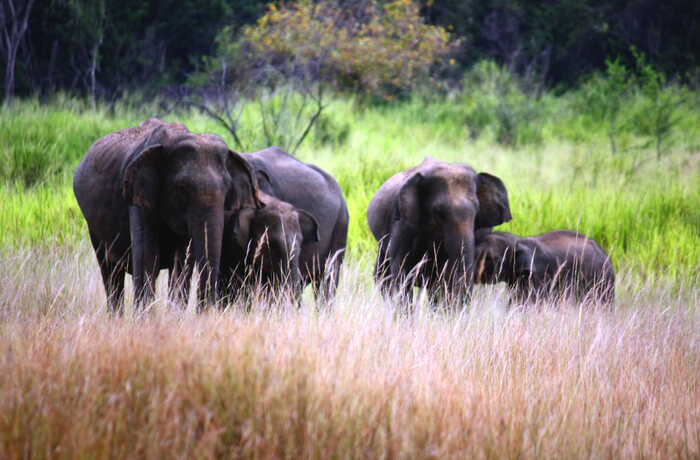 Udawalawe National Park Elephant Trail