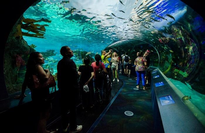 Visit-Ripley's-Aquarium-Of-Canada