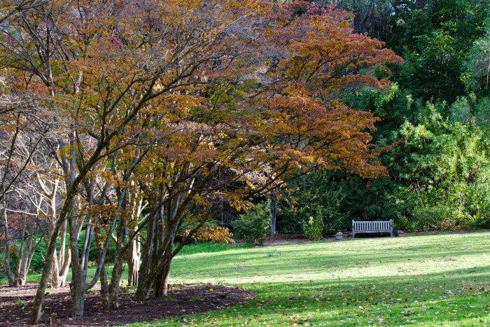 Visit the Blue Mountains Botanic Garden