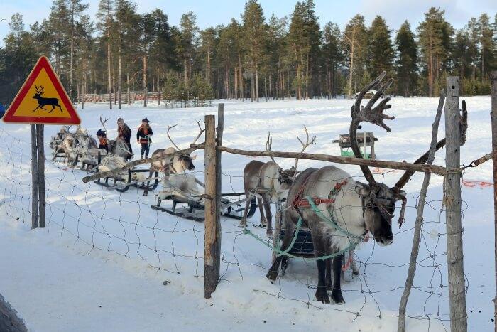 Visit the reindeers at a Reindeer Farm