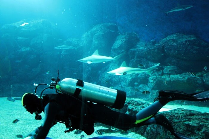 Tank People and Aquarium