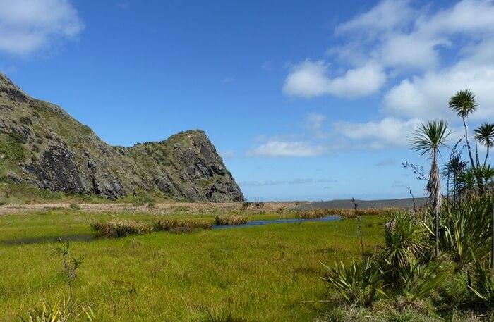 View of Waitakere Ranges