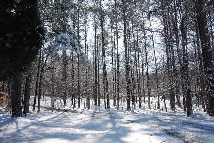 Weather In Georgia In December