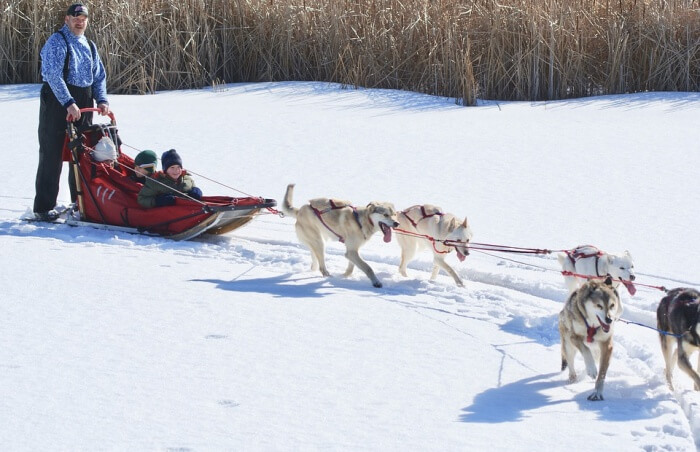 Winter Dog Mushing