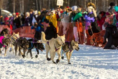 Best Festivals in Alaska