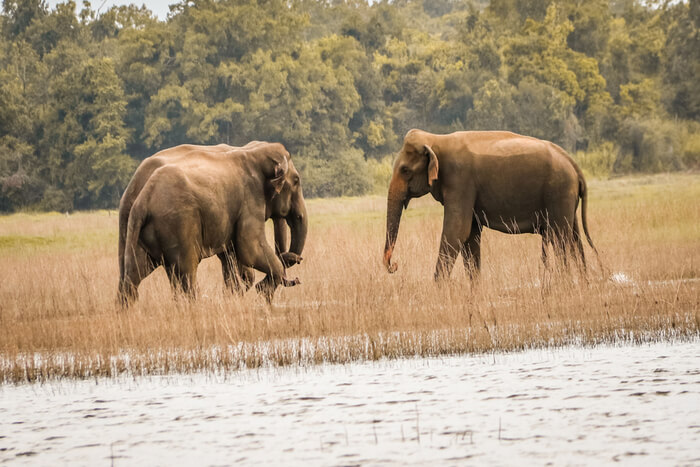 Fabulous Maduru Oya National Park