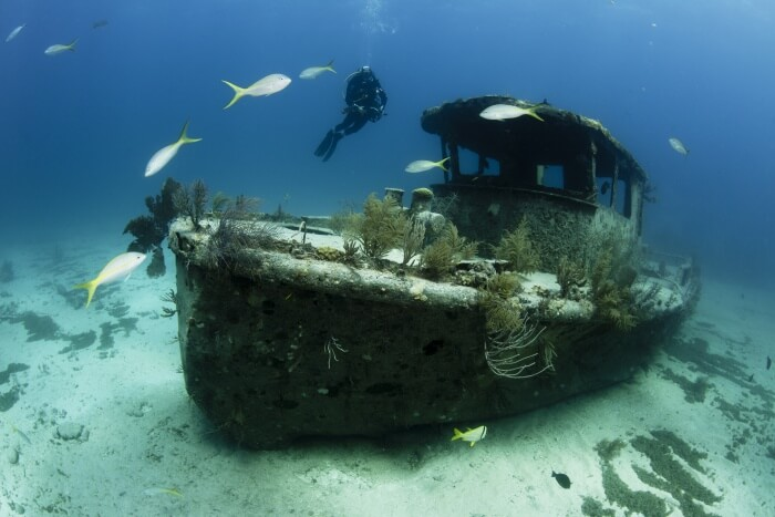 Fun Places for Scuba Diving in Auckland