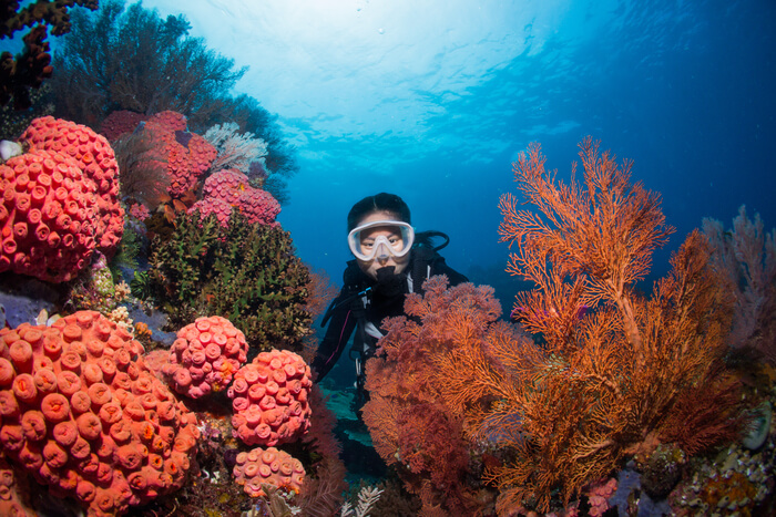 Best of Scuba Diving in Fiji