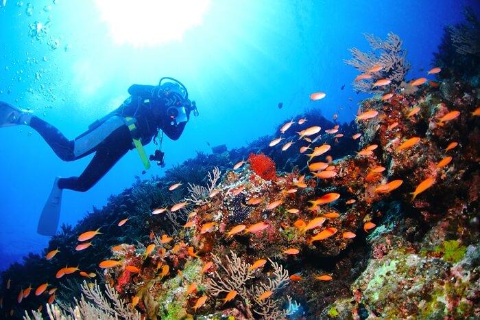 japan scuba diving cover