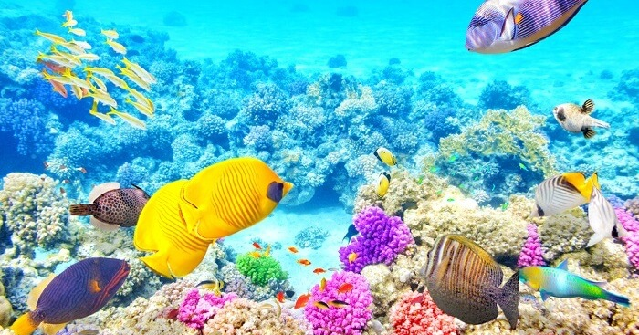Great Barrier Reef In Australia: All About The Stunning Reef!