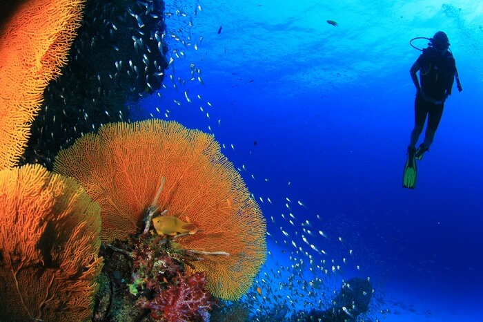 scuba diving person