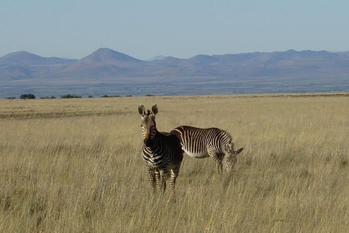 About Mountain Zebra National Park