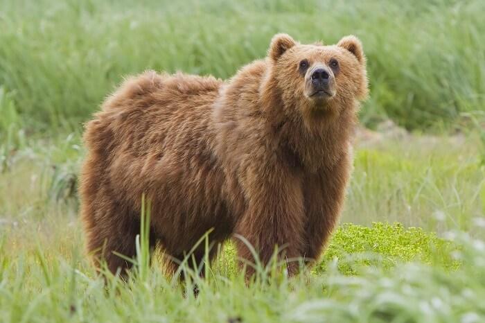 Alutaguse Bear-Watching Area