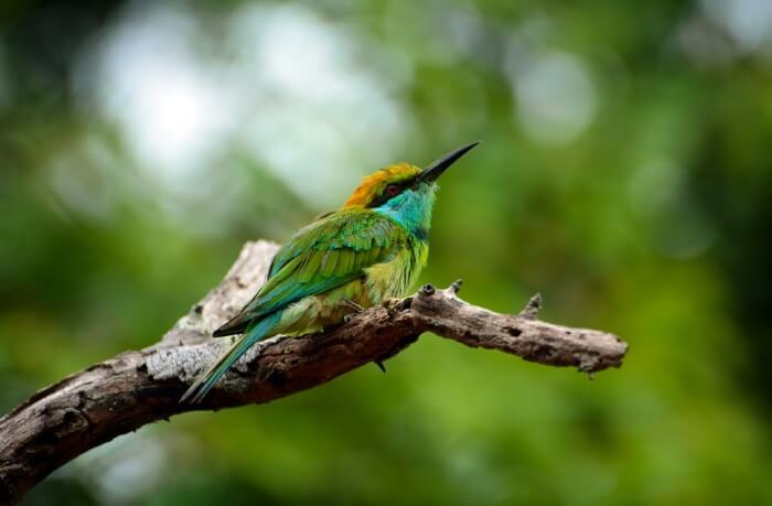 Bird Watching in Tissamaharama
