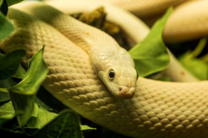 Die Vonds Snake Centre