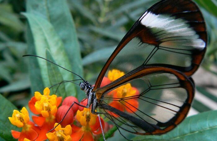 Durmitor National Park Explore Wildlife
