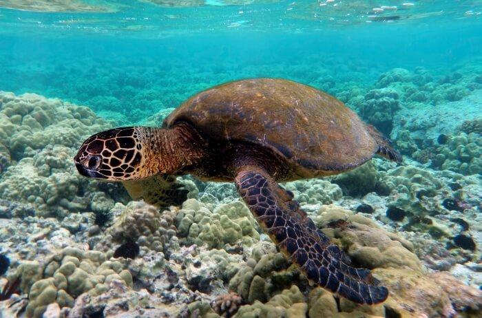 Eleuthera-Turtles