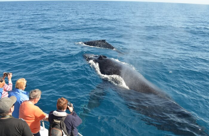 Experience whale watching