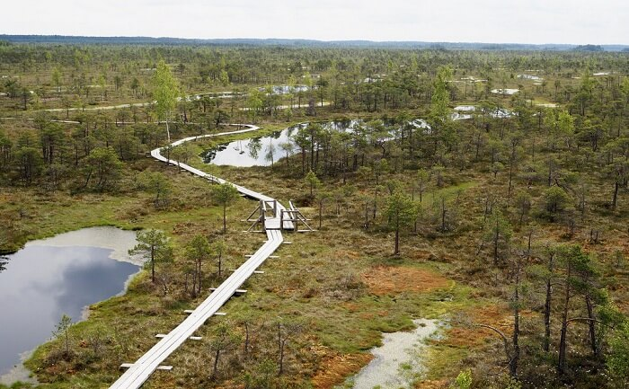 Great Kemeri Bog Boardwalk