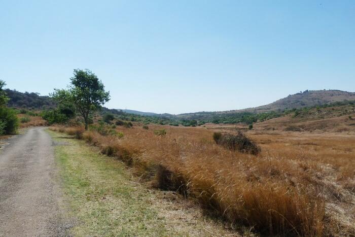 Hiking At Groenkloof Nature Reserve