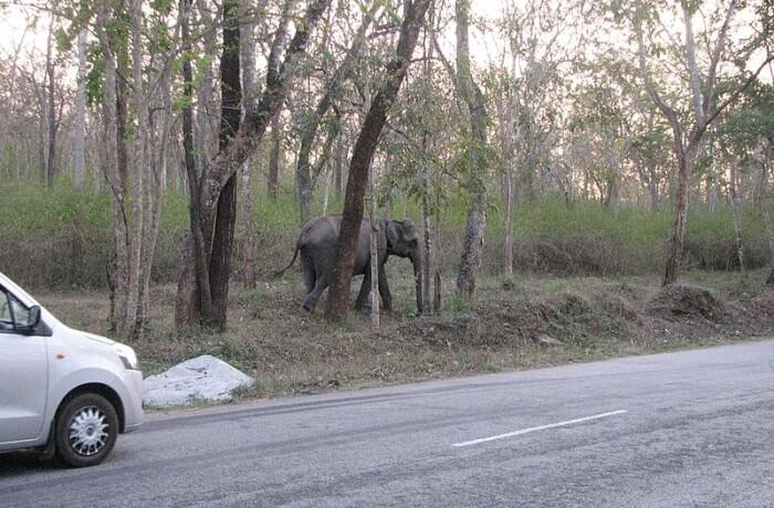 How To Reach Mudumalai National Park