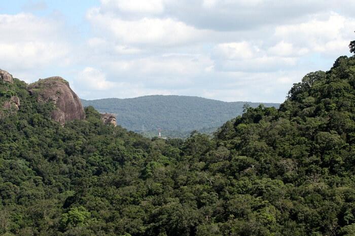 Kaludiya Pokuna Forest
